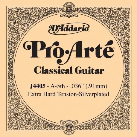 D'addario - J4405 1